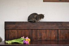 Grijze pluizige kat met tulpen Royalty-vrije Stock Afbeeldingen