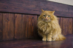 Grijze pluizige kattenpoten Royalty-vrije Stock Foto