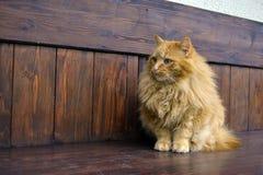 Grijze pluizige kattenpoten Royalty-vrije Stock Foto's
