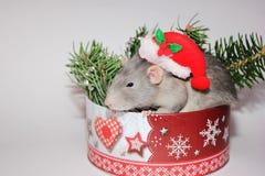 Grijze rat Nieuw jaar 2020 Symbool van het jaar van de rat De decoratie van Kerstmis Gelukkige nieuwe jaargelukwensen Het concept stock afbeelding