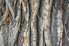 Grijze schors van een oude boom met barsten en spaanders royalty-vrije stock afbeeldingen