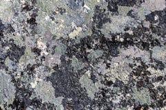 Grijze steen met de textuur van het crustosekorstmos Royalty-vrije Stock Afbeeldingen