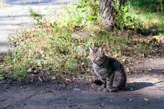 Grijze straatkat op grondweg Stock Afbeeldingen