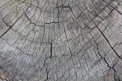 Grijze textuur van boomstomp Stock Afbeelding