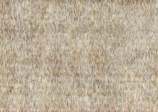 Grijze van het fauxbont textuur als achtergrond Royalty-vrije Stock Afbeelding