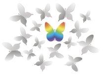 Grijze vlinder en gekleurde vlinder Royalty-vrije Stock Foto