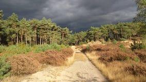 Grijze wolken boven bos Stock Foto
