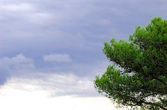 Grijze wolken en pijnboomboom Stock Foto's