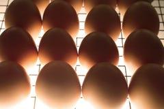 Gril avec des oeufs dans l'incubateur Images libres de droits
