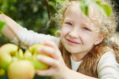 Gril with curly hair picking up apples Stock Images