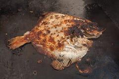 Gril de poissons Photo libre de droits