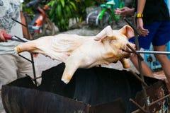 Gril entier de rôti du feu de nourrisson de porcelet de porc Photographie stock libre de droits