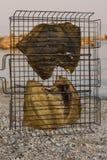 Gril frit de poissons sur le bord de la mer Photo libre de droits