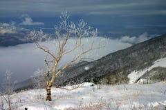 Gril van de lente - laatste sneeuw in zuidelijke sikhote-Alin stock afbeeldingen