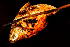 Grill carp in isolated on  black Royalty Free Stock Photo