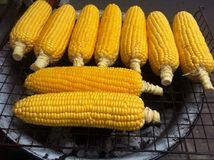 Grill corn royalty free stock photography