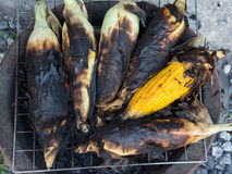Grill corn by place on a rack Royalty Free Stock Photography