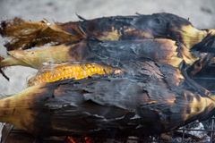 Grill corn by place on a rack Stock Photography