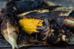 Grill corn by place on a rack Stock Photo