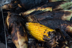 Grill corn by place on a rack Royalty Free Stock Images