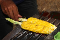 Grill corns Royalty Free Stock Photo
