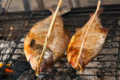 Grill fish Stock Images