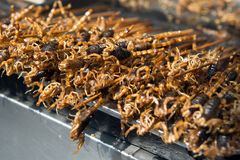 Grill and fried scorpions on stick Royalty Free Stock Photography
