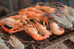 Grill giant fresh water prawn Stock Images