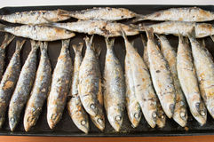 Grill grilled sardines Stock Image