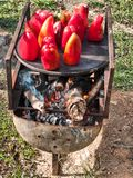 Grill peppers homemade. Curious homemade grill peppers. Traditional way of roasting peppers Stock Image