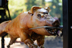 Grill piglet Stock Images
