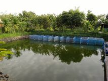 Grill ryba w klatkach w gospodarstwie rolnym w Tajlandia Zdjęcia Stock