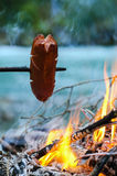 Grill Sausage At The Campfire Royalty Free Stock Photography