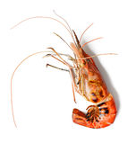 Grill shrimp Royalty Free Stock Photo