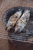 Grill striped snakehead fish with salt Royalty Free Stock Images