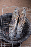 Grill striped snakehead fish with salt Stock Photography