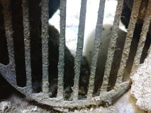 Grill. Zoomed Sewage grill Royalty Free Stock Photos