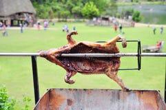 Grilla det hela svinet på varmt kol i by i Vietnam Royaltyfri Fotografi