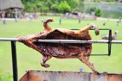 Grilla det hela svinet på varmt kol i by i Vietnam Royaltyfri Foto