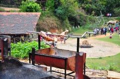 Grilla det hela svinet på varmt kol i by i Vietnam Fotografering för Bildbyråer