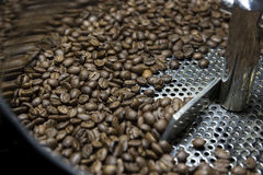 Grilla för kaffeböna royaltyfria foton