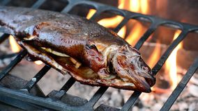 Grillad fisk på en BBQ-brand stock video