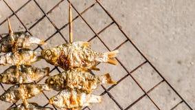 Grillad fisk på gallret Fotografering för Bildbyråer