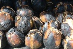 Grillad kokosnöt, kokosnötbrännskada arkivfoto