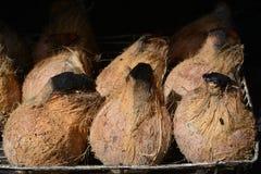 Grillad kokosnöt, kokosnötbrännskada arkivfoton