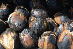 Grillad kokosnöt, kokosnötbrännskada royaltyfri bild