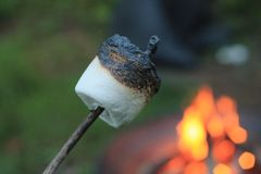 Grillad marshmallow Royaltyfri Bild