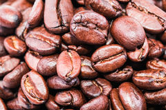 Grillade bruna kaffebönor tätt upp Royaltyfria Foton