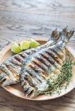 Grillade Dorade Royale Fish Arkivbild