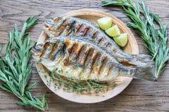 Grillade Dorade Royale Fish Royaltyfri Foto